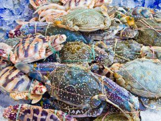 Fresh raw flower crab or blue crab