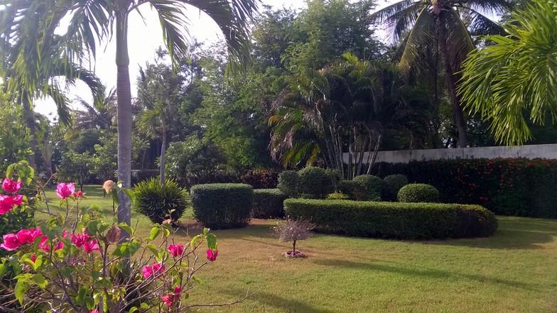 The tropical garden.