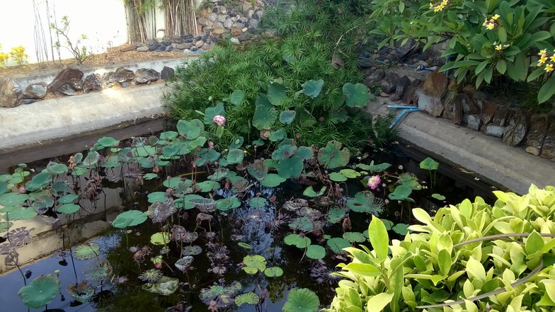 Le jardin privé de la maison principale, avec une cascade et un bassin.